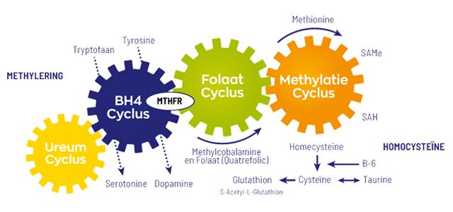 Methylering
