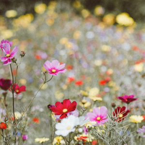 geurstokjes veldbloemen